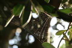 Spider Web, Leaf, Macro Photography, Tree Stock Images