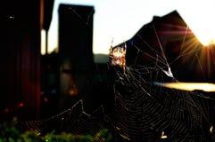 Spider Web, Light, Sunlight, Tree Royalty Free Stock Images
