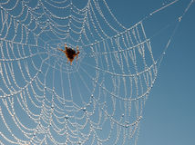 Spider web like a delicate necklace of brilliant c Stock Image