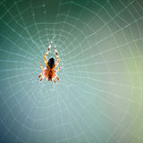 Spider in the web Stock Images