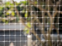 Web and Located on The Mesh. Spider Web Located on The White Mesh stock photo