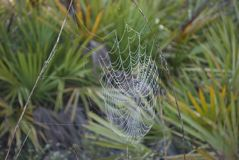 Natural spider net close up in the wild forest in the morning royalty free stock images