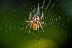 Spider on web macro Stock Photography