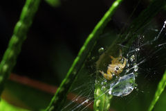 Spider. The spider on the web by macro photography Stock Photo