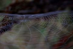Spider Web, Macro Photography, Close Up, Invertebrate Stock Photography
