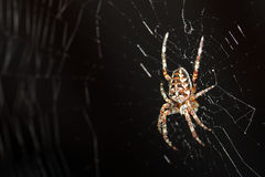 Spider in web Stock Photos