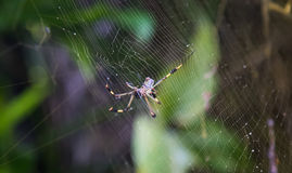 Spider in a web Stock Image