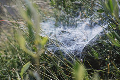 Spider web. A spider web in a meadow in Israel Royalty Free Stock Image