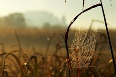 Spider Web In Autumn Morning royalty free stock photography