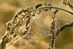 Spider web on a meadow at sunrise Stock Photos