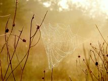Spider web on a meadow at sunrise Stock Image