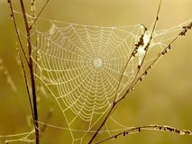 Spider web on a meadow at sunrise. Autumnal spider web on a meadow in the rays of the rising sun Stock Images