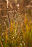 Spider web on a meadow at sunrise. Royalty Free Stock Images