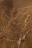 Spider web on a meadow at sunrise. Stock Photos