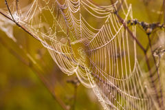 Spider web on a meadow at sunrise. Stock Photo
