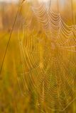 Spider web on a meadow at sunrise. Stock Images