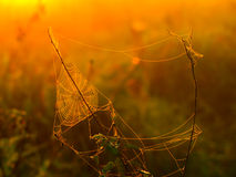 Spider web on a meadow at sunrise time Royalty Free Stock Images