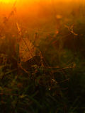 Spider web on a meadow at sunrise time Stock Images