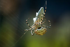 Spider on web with mining. Stock Photo
