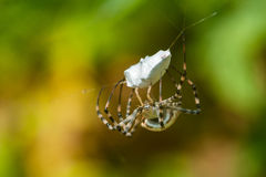 Spider on web with mining. Royalty Free Stock Photography