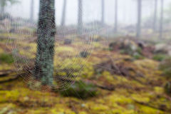 Spider web in a misty forest. Spider web photographed against a tree in a misty forest Royalty Free Stock Photography
