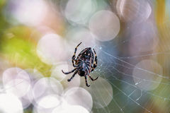 Spider on the web in Montenegro Royalty Free Stock Photography