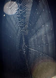 Spider web and moon Stock Photos