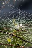 Spider web on the morning Royalty Free Stock Images