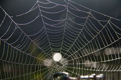 Spider web on the morning Royalty Free Stock Image