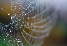 Spider web with morning dew stock images