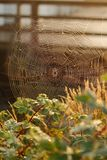 Spider Web, Morning Dew Stock Photo