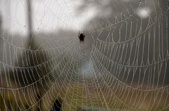 Spider Web. With morning dew on it Stock Photography