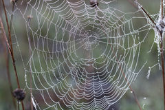 Spider web. Stock Image
