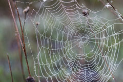 Spider web. Royalty Free Stock Images