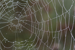 Spider web. Stock Images