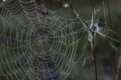 Spider web. Stock Photo