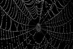 Spider web. With morning dew Royalty Free Stock Photos