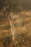 Spider web in the morning dew Royalty Free Stock Images