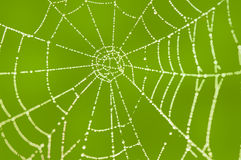Spider web. With morning dew Stock Images