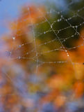 Spider web morning dew autumn. Close-up of morning dew water droplets on spider web taken on a beautiful sunny morning in fall (autumn) with colorful background stock photography