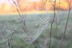 Spider web with morning dew Royalty Free Stock Image