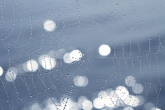 Spider Web. Morning dew on a spider web on a background of water Royalty Free Stock Photo