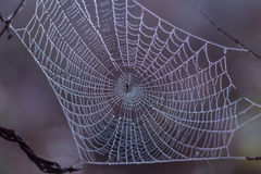 Spider web with morning dew. Close-up Stock Photo