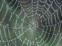 Spider web with morning dew Stock Image