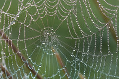Spider web. With morning dew drops closeup Stock Photography