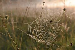 Spider Web Morning Dew Freshness Dawn Royalty Free Stock Images