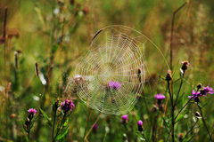Spider web in morning dew Stock Photo