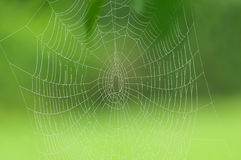 Spider web with morning dew on a green background Royalty Free Stock Images