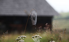 Spider web in morning dew light Stock Photo
