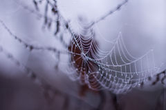 Spider web with morning dew. Macro Stock Photo